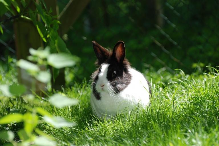 neues zur kaninchenseuche rhd kleintierpraxis roth. Black Bedroom Furniture Sets. Home Design Ideas